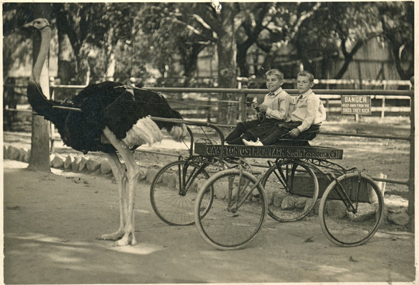 Another photo, taken about 1916, of two boys at the ostrich farm.