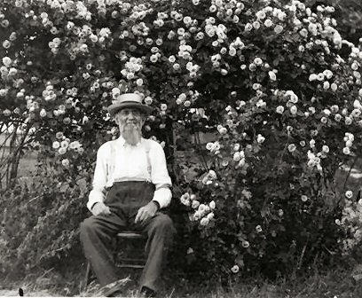 M. A. Blackledge with rose bush